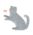 Scottish Fold Isolated Breed of Domestic Cat vector image