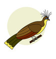 tropical bird hoatzin on a white background vector image