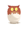 adorable newborn brown owlet in broken egg shell vector image vector image