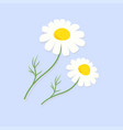 cute chamomile flowers isolated on blue background vector image vector image