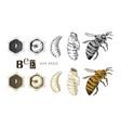 hand drawn life cycle a bee vector image