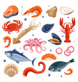 seafood menu fish and shrimp lobster and squid vector image vector image