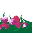 tulips flower bouquet decorative frame or spring vector image vector image