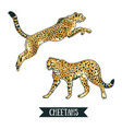 with leopard cheetah jumping animal hand drawn vector image