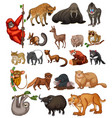 wild animals on white background vector image vector image