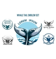 Whale Tail Set vector image