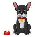 french bulldog sitting vector image