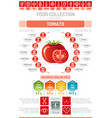 food infographics poster tomato vegetable vector image vector image