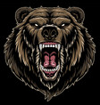 head a ferocious grizzly bear vector image vector image
