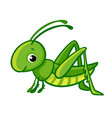 isolated cute green grasshopper vector image vector image