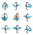 set of sea horse vector image vector image