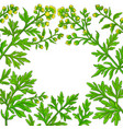 wormwood plant frame on white background vector image