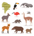 animal in south america wild animalistic vector image vector image