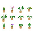 houseplants icon set potted plants and flowers in vector image vector image