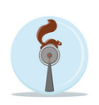 squirrel ball vector image vector image