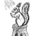 Squirrel Sketch vector image