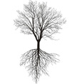Bare tree with roots vector image vector image