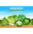 Many kind of green vegetables vector image vector image