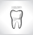 tooth isolated tooth hand drawn sketch icon tooth vector image vector image