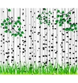 Birch trees and grass background vector image