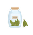 dried bay leaves stored in clear jar isolated on vector image vector image
