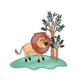 lion cartoon in forest next to the trees in vector image vector image