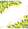 Luxury lemon brunches background