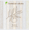 pure essential oil collection mandarine wooden vector image vector image