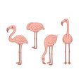 set pink flamingos vector image