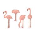 Set pink flamingos