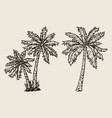 palm trees vintage tropical composition vector image
