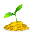 Plant and coins 10eps vector image