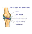 structure ofthe joint vector image vector image