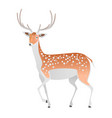 elegant deer on a white background vector image