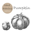 Hand Drawn pumpkin Monochrome sketch vector image