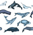pattern with whale hand drawn vector image vector image