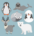 artic animals cartoon collection set vector image vector image