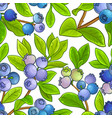 blueberry pattern on white background vector image vector image