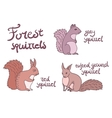 Forest squirrels set vector image