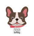 french bulldog face cute brown frenchie with vector image