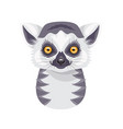 funny ring-tailed lemur portrait on white vector image