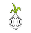 garlic food flat vector image vector image