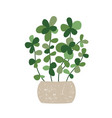 houseplant with potted vector image