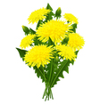 Bouquet of flowers dandelion vector image vector image