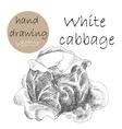 Hand Drawn cabbage Monochrome sketch vector image
