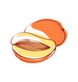 ripe mango isolated icon vector image vector image