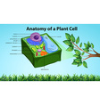 Anatomy of plant cell with names vector image vector image