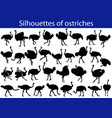 collection of silhouettes of common ostriches vector image vector image