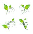 Leaf Floral Decoration Eco Set vector image vector image