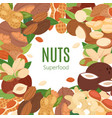 nuts superfood collection flat cartoon banner vector image